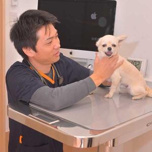 photo-dog